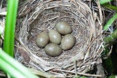 Гнездо певчей птицы осоки в природе Стоковые Изображения