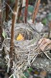 Гнездо покинутой птицы Стоковое Изображение RF