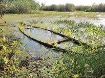 Гнездо пруда стоковая фотография rf