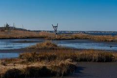Гнездо птицы в соленых болотах Стоковое Фото