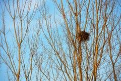 Гнездо птицы на белых ветвях с солнечностью и голубым небом Стоковые Изображения