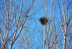 Гнездо птицы на белых ветвях с солнечностью и голубым небом Стоковая Фотография RF