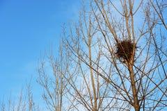 Гнездо птицы на белых ветвях с солнечностью и голубым небом Стоковое фото RF