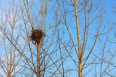 Гнездо птицы на белых ветвях с солнечностью и голубым небом Стоковое Изображение