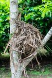 Гнездо птицы на ветви дерева Стоковые Фото