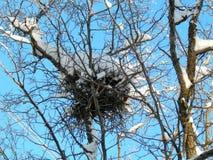 Гнездо птицы на дереве в зиме Стоковые Фото
