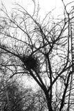 Гнездо птицы на дереве Стоковое Изображение