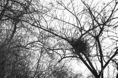 Гнездо птицы на дереве Стоковое Фото