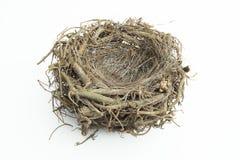 Гнездо птицы с изолированной предпосылкой Стоковая Фотография
