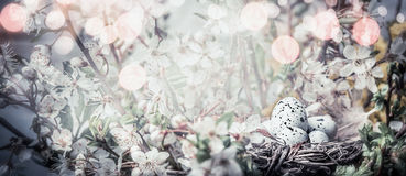 Гнездо птицы с яичками на цветении вишневого дерева Знамя пасхи с милой природой весеннего времени Стоковая Фотография