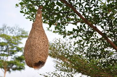 Гнездо птицы Стоковая Фотография RF