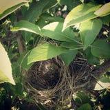 Гнездо птицы Стоковые Фотографии RF