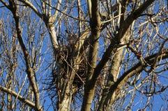 Гнездо птицы Стоковое Фото