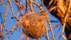 Гнездо птицы Стоковое Изображение RF