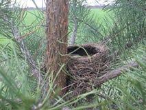 Гнездо птицы Стоковая Фотография