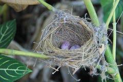 Гнездо птиц в дереве Стоковое Изображение