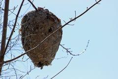 Гнездо пчелы Стоковое Изображение