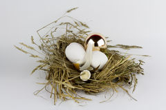Гнездо с золотыми яичками Стоковое фото RF