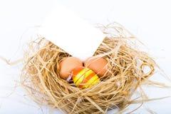 Гнездо с пустым пространством на белой предпосылке Стоковое Фото