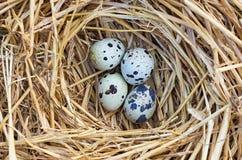 Гнездо триперсток Стоковое фото RF