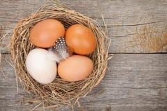 Гнездо яичек Стоковые Фотографии RF