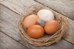 Гнездо яичек Стоковое фото RF