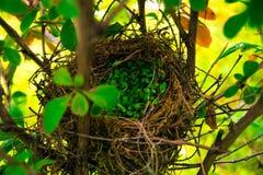 Гнездо Стоковые Изображения RF