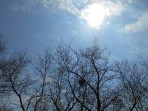 Гнездо Стоковое фото RF