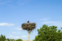 Гнездо ` s аиста, естественное гнездо ` s аиста, щенята и ` s аиста гнездятся, изображения аиста на крыше, Стоковое Фото