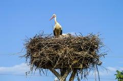 Гнездо ` s аиста, естественное гнездо ` s аиста, щенята и ` s аиста гнездятся, изображения аиста на крыше, Стоковое фото RF
