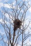 Гнездо ` s птицы на дереве Стоковые Изображения RF