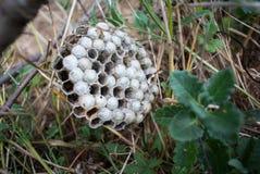 Гнездо ` s шершня Стоковые Фотографии RF