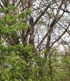 Гнить дерево, отверстия Woodpecker, снаружи стоковые изображения rf