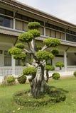 Гнуть дерево Стоковая Фотография RF