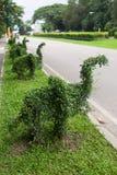 Гнуть деревья в форме слона Стоковое фото RF