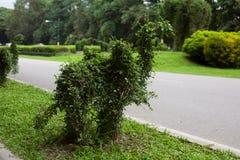 Гнуть деревья в форме слона Стоковая Фотография RF