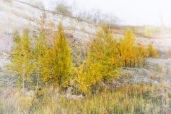год вектора времен сезонов Осень Стоковые Фотографии RF