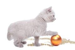 год великобританского котенка украшения новый играя Стоковые Фотографии RF