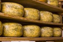 голландец сыра III Стоковые Фото
