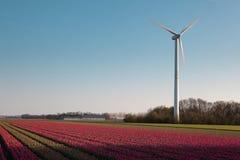 голландская ветрянка тюльпанов Стоковое фото RF