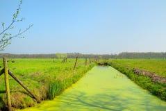 голландский ландшафт типичный Стоковые Изображения