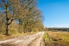 Голландский ландшафт Buurserzand около Haaksbergen в Twente -го марте, Оверэйселе, Нидерландах Стоковая Фотография RF