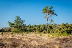 Голландский ландшафт Buurserzand около Haaksbergen в Twente -го марте, Оверэйселе, Нидерландах Стоковые Изображения