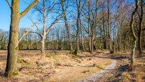 Голландский ландшафт Buurserzand около Haaksbergen в Twente -го марте, Оверэйселе, Нидерландах Стоковое Фото