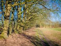 Голландский ландшафт Buurserzand около Haaksbergen в Twente -го марте, Оверэйселе, Нидерландах Стоковое Изображение RF