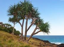 Голова Австралия Fingal ладони пандана Стоковое Изображение