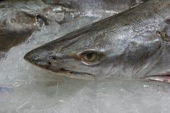 Голова акулы на льде Стоковая Фотография