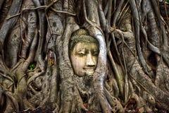 Голова Будды в Ayuthaiya Таиланде стоковая фотография