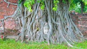 Голова Будды Wat Mahathat, Ayutthaya, Таиланда видеоматериал