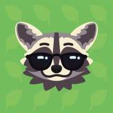 Голова енота эмоциональная Иллюстрация вектора милого енота в солнечных очках показывает холодную эмоцию Внушительное emoji smile Стоковое фото RF